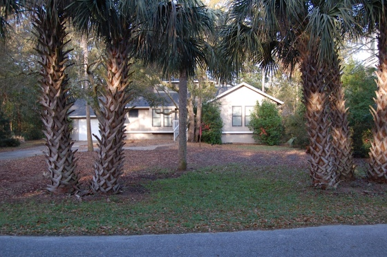 Front yard with weeds and overgrown shrubs