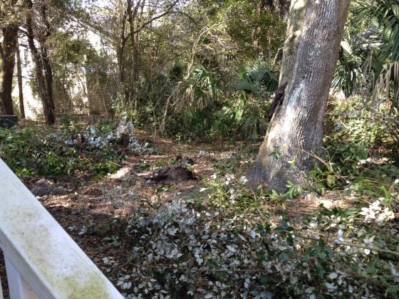 Backyard debris